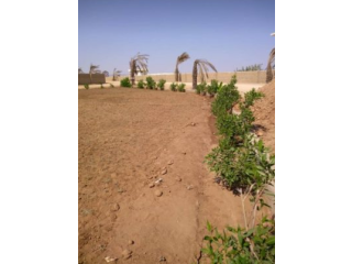 Farm Houses Plots Land On Installments For Sale